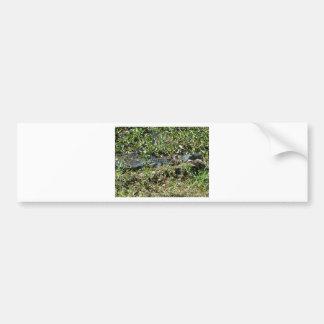 Alligator de marais de la Louisiane en fin de Jean Autocollant De Voiture