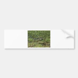 Alligator de marais de la Louisiane en Jean Autocollant Pour Voiture