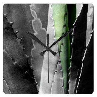 Aloès - macro photographie de beaux-arts dans noir horloge carrée