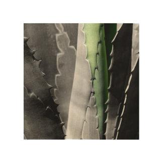 Aloès - macro photographie de beaux-arts dans noir impressions sur bois