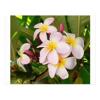 Aloha le Frangipani hawaïen fleurit douche Carte Postale