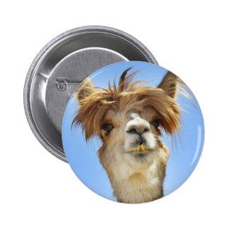 Alpaga fol de cheveux badges