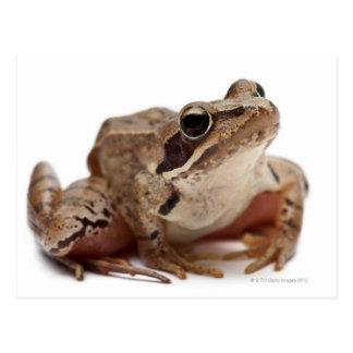 Amarrez la grenouille - arvalis de Rana Carte Postale