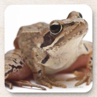Amarrez la grenouille - arvalis de Rana Dessous-de-verre