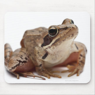 Amarrez la grenouille - arvalis de Rana Tapis De Souris