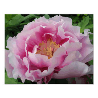 Amende rose d'aquarelle de pivoine florale poster