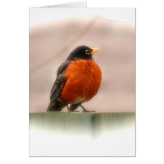 Américain animal Robin d'oiseau Carte De Vœux