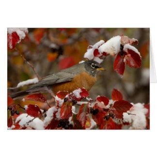 Américain masculin Robin dans l'aubépine noire Carte De Vœux