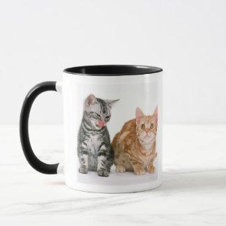 Américain Shorthair 9 Mug