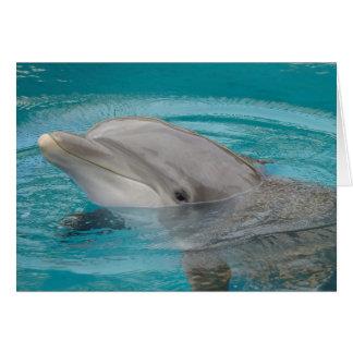 Ami de dauphin bonjour carte de vœux