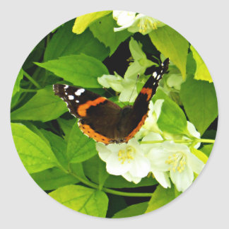Amiral rouge papillon sticker rond