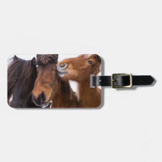 Amis islandais de cheval, Islande Étiquette À Bagage