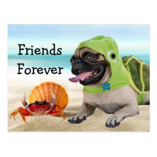 Amis pour toujours : Crabe + Carlin de tortue Carte Postale