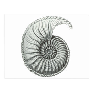 Ammonite Carte Postale