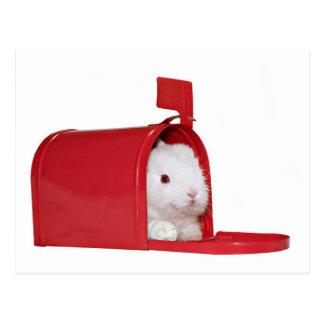 Amour dans le courrier carte postale