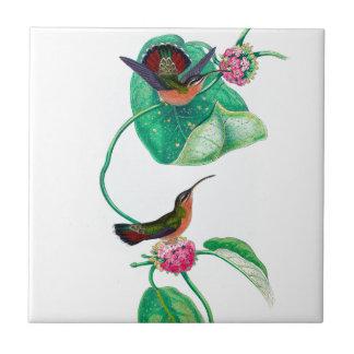 Amour de colibri carreau