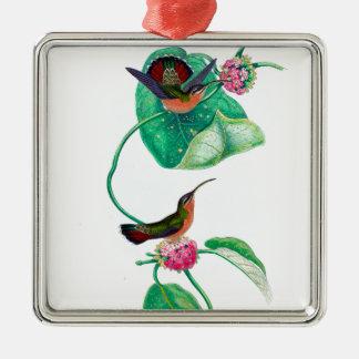 Amour de colibri ornement carré argenté