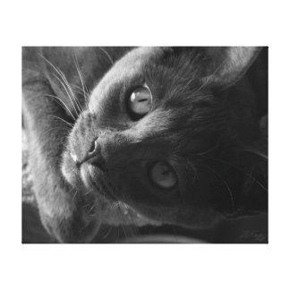 Amour de Kitty Impression Sur Toile