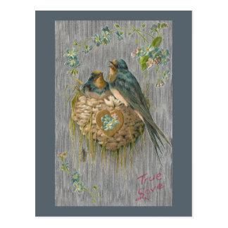 Amour vrai pour des hirondelles dans le nid carte postale