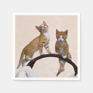 Amoureux des chats drôle de photo de gymnase de serviette en papier