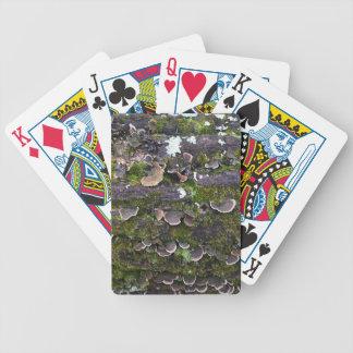 amusement moussu de champignon jeu de poker