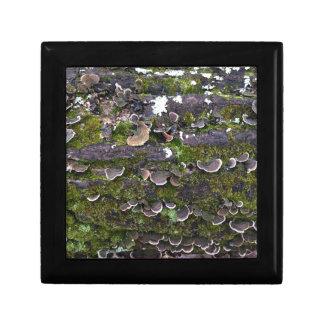 amusement moussu de champignon petite boîte à bijoux carrée