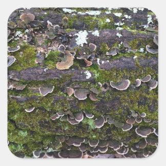 amusement moussu de champignon sticker carré