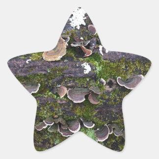 amusement moussu de champignon sticker étoile