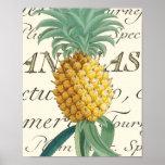 Ananas avec le détail calligraphique affiche
