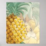 Ananas avec l'élargissement affiche