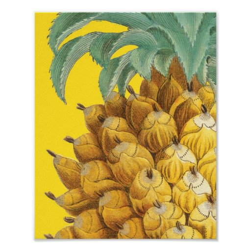Ananas botanique en jaune posters