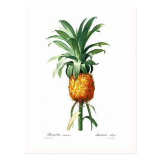 Ananas Carte Postale