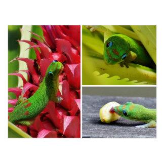 Ananas mignon Hawaï de rose de gecko de jour de la Carte Postale