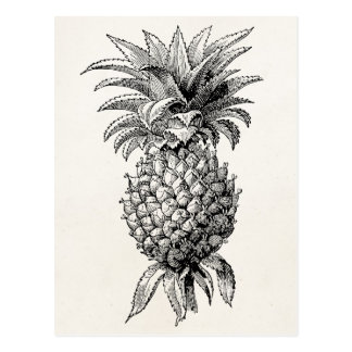 Ananas vintages d'illustration d'ananas de 1800s carte postale