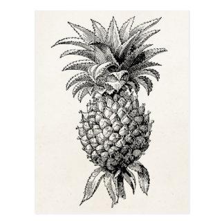 Ananas vintages d'illustration d'ananas de 1800s carte postale