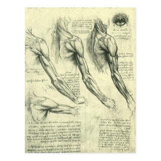 Anatomie de bras et d'épaule par Leonardo da Vinci Carte Postale