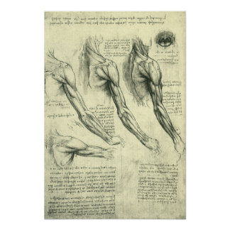 Anatomie de bras et d'épaule par Leonardo da Vinci Poster