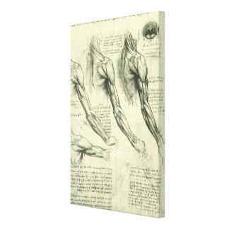 Anatomie de bras et d'épaule par Leonardo da Vinci Toile