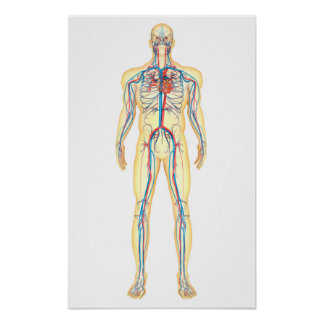 posters sant cardio vasculaire sant cardio vasculaire. Black Bedroom Furniture Sets. Home Design Ideas