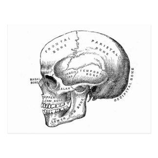 Anatomie de crâne cartes postales