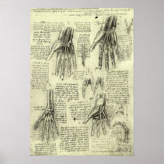 Anatomie de la main humaine par Leonardo da Vinci Poster