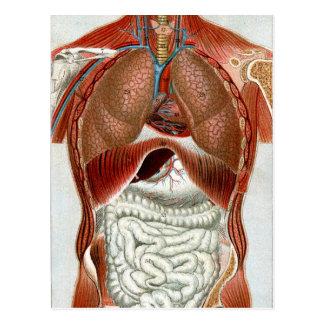 Le corps humain cartes postales for A l interieur du corps humain