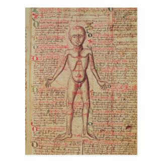 Anatomie du corps humain carte postale