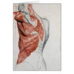 Anatomie humaine ; Muscles du torse et de l'épaule Cartes De Vœux