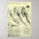 Anatomie Leonardo da Vinci de muscles de bras et d Posters