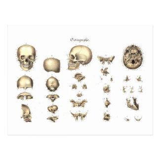 Anatomie méthodique du crâne carte postale