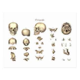 Anatomie méthodique du crâne cartes postales
