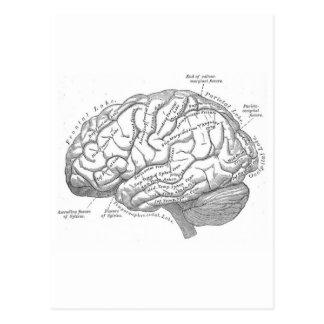 Anatomie vintage de cerveau carte postale