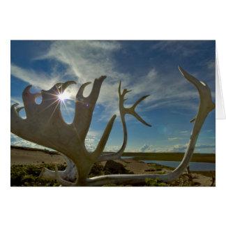 Andouillers de caribou au sol arénacé dans carte de vœux