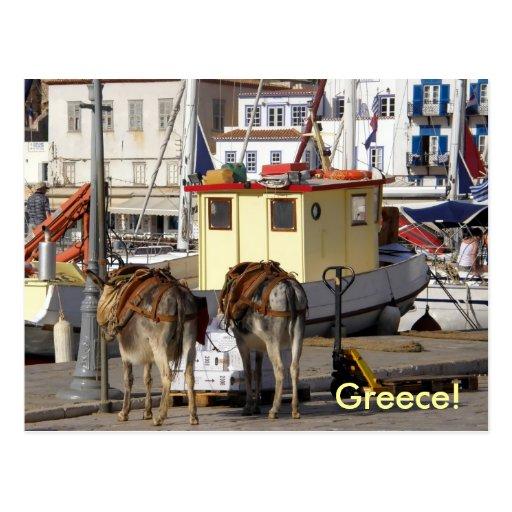 âne sur le quai en Grèce Carte Postale